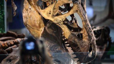 Museum Smithsonian Pamerkan Fosil Purba yang Langka Sekaligus Mahal