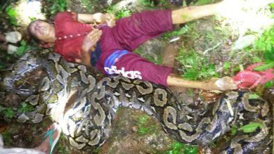 Wanita di Sulawesi Tenggara Tewas Dililit Ular Piton Usai Pulang dari Kebun
